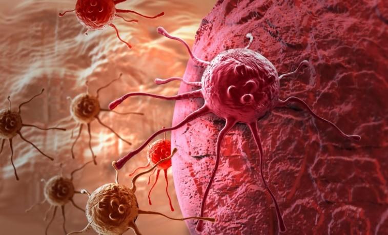 Pd-1 купить препарат от рака – Здоровая печень